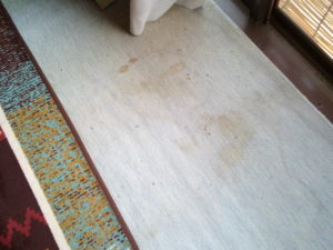 汚いカーペット2